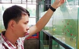 Nuôi hàng trăm bể cá, chàng trai Bến Tre trở thành triệu phú, kiếm 50 triệu đồng mỗi tháng