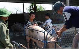 Giá lợn hơi giảm mạnh, xuất hiện mức 55.000 đồng/kg