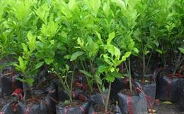 Giống cây trồng Miền Nam (SSC) báo lãi 9 tháng đạt 34 tỷ đồng, hoàn thành 87% kế hoạch năm