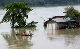 Ngân hàng Thế giới: Lũ lụt có nguy cơ 'cuốn' đi hơn 850 triệu USD tăng trưởng kinh tế Việt Nam mỗi năm