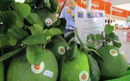 Bưởi Việt rộng đường xuất ngoại