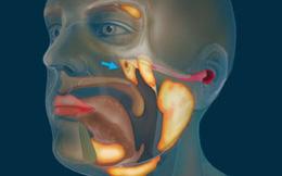 Cơ quan mới trong cổ họng người: Bị 'bỏ sót' suốt nhiều thế kỷ vì 'nấp kỹ' trong hộp sọ