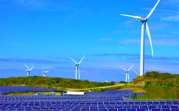 'Đốn' rừng làm năng lượng tái tạo: Cần thận trọng!