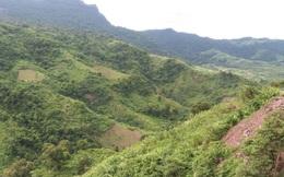Phát hiện một doanh nghiệp chuyển đổi trái phép hàng chục hecta đất rừng tại Lâm Đồng