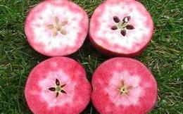 Pendragon: Loại táo vượt qua 14 'đối thủ' để được đánh giá bổ dưỡng nhất thế giới; ở VN có bán không?