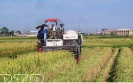 Thái Bình khắc phục sản xuất nhỏ, manh mún trong nông nghiệp