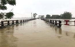Nghệ An: Người dân ven sông phải lên đê dựng lều cho trâu bò trú ẩn