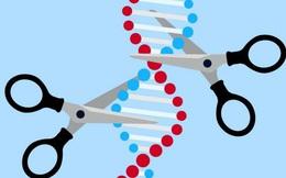 Hai nhà khoa học nữ đoạt giải Nobel Hóa học 2020 về chỉnh sửa bộ gen