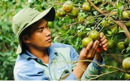 Nhiều chính sách ưu đãi đón làn sóng đầu tư vào nông nghiệp