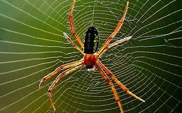 Thấy 1 con nhện đang bò trên tường, 3 người có 3 phản ứng khác biệt nhưng lại khiến tất cả chúng ta phải ngẫm lại mình