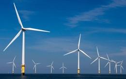 Bộ NN&PTNT nói gì về việc Bình Thuận xin chuyển hơn 28ha rừng tự nhiên làm nhà máy điện gió?