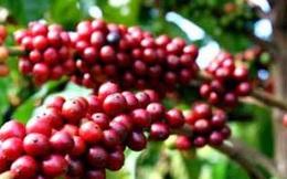 Giá cà phê thế giới từ nay đến 2021 sẽ ra sao?