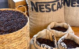 Nestle đang mua tới gần 30% lượng cà phê của Việt Nam