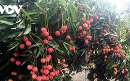 Trái cây vùng nhiệt đới được thị trường châu Âu quan tâm