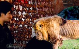 """""""Thần dược chốn phòng the"""" - cái mác mà con người gắn lên động vật để truy cùng diệt tận từ cá, chim đến sư tử và tiếp theo là loài nào?"""