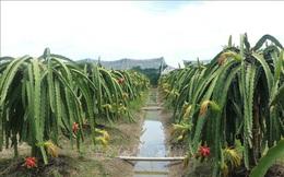 Thứ trưởng Trần Thanh Nam: Không phát triển nông nghiệp hữu cơ ồ ạt
