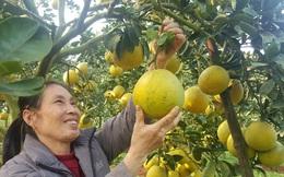 Nông dân Hà Nội trồng cây đặc sản, nuôi con đặc sản bán dễ, lời cao