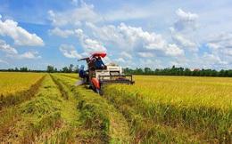 Giá lúa tốt, xuất khẩu gạo khả quan