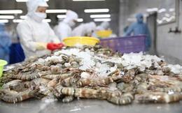 Thuỷ sản Minh Phú (MPC) báo lãi tăng 23% sau 9 tháng, đạt hơn 477 tỷ đồng