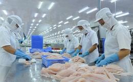 Trung Quốc siếtnhập cá tra, doanh nghiệp Việt tránh chào giá thấp