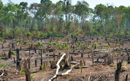 Vì sao Gia Lai xin chuyển mục đích sử dụng 4,7 nghìn ha rừng nghèo?