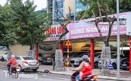 Hàng cây sưa đỏ phố Nguyễn Văn Huyên chết khô, 'vô phương cứu chữa'