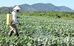 Nếu chỉ được chọn một yếu tố trong chuyển đổi số nông nghiệp Việt Nam, các chuyên gia sẽ chọn gì?
