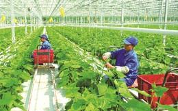 """Phát triển hệ sinh thái hỗ trợ doanh nghiệp nông nghiệp ứng dụng công nghệ cao: Đòn bẩy """"cho vay theo chuỗi giá trị"""""""