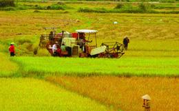 Thủ tướng cho phép chuyển mục đích sử dụng đất trồng lúa tại 3 tỉnh