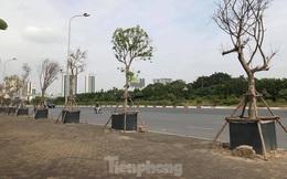 Cách trồng cây 'khác lạ' trên vỉa hè Hà Nội