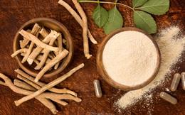 Loại sâm có vẻ ngoài xấu xí như rễ cây khô cong queo nhưng bồi bổ sức khỏe cực tốt: Giảm căng thẳng, ngăn ngừa lão hóa, phòng chống ung thư