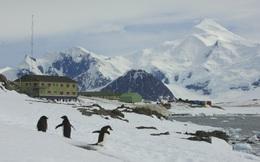 """Nam Cực xuất hiện ca nhiễm Covid-19: """"Thành trì"""" cuối cùng trên thế giới chưa bị đại dịch tấn công đã sụp đổ"""