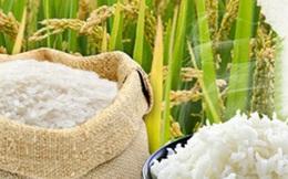 """Giá gạo Việt Nam đạt """"đỉnh"""" 9 năm, gạo Thái Lan cao nhất 6 tháng do khan hiếm nguồn cung"""