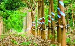 Cao su Phước Hòa (PHR) đặt kế hoạch lợi nhuận năm 2021 giảm 35%, đề xuất chuyển đổi đất cao su sang Khu công nghiệp