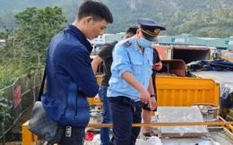 """Giật mình trước nguy cơ """"vỡ trận"""" nhập khẩu cá tầm vào Việt Nam"""