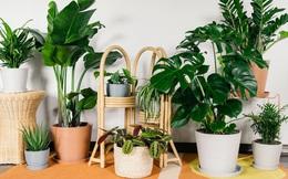 Trang hoàng nhà cửa bằng 7 loại cây xanh này vừa giúp thanh lọc không khí vừa đem tới không gian tươi xanh, hút phúc khí cho gia đình