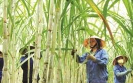 Đối mặt với đường giá rẻ ngoại nhập, bao giờ doanh nghiệp Việt hết cảnh 'chạy cơm từng bữa'?
