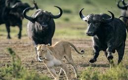 """Nghe thấy tiếng """"ục ục"""", cả bầy động vật chạy bán sống bán chết và chân tướng phía sau khiến nhiều người tỉnh ngộ"""