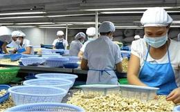 Giá điều nhân trong nước cao hơn giá xuất khẩu, doanh nghiệp gặp khó