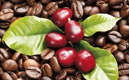 Dự báo đầu tư vào cà phê đến cuối năm sẽ sinh lời, đường và cacao nguy cơ lỗ