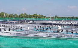 Việt Nam sẽ có trung tâm công nghiệp tôm đầu tiên