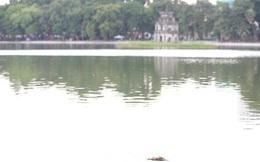 Làm xong kè, Hồ Gươm xuất hiện cá chết