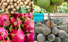 Dưa lưới đắt đỏ ế thừa mùa dịch, tìm mở lại đường xuất khẩu trái cây đặc sản