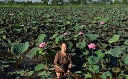 Báo Indonesia tôn vinh người phụ nữ đầu tiên mang tơ sen vào ngành dệt Việt Nam