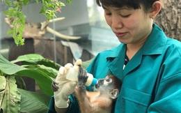 Hơn 300 nhân viên Thảo Cầm Viên Sài Gòn đồng lòng giảm 30% lương, vườn thú 156 tuổi kêu gọi sự ủng hộ từ cộng đồng