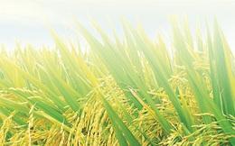 Giống cây trồng miền Nam (SSC) chốt quyền nhận cổ tức bằng tiền tỷ lệ 20%
