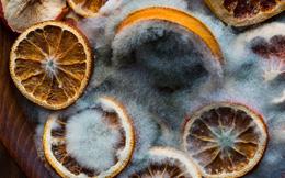 Điểm mặt thêm 3 chất là tác nhân gây ung thư luôn tiềm ẩn trong nhà bạn: Xuất hiện trong nhiều món ăn, đồ dùng có thể bạn sử dụng hàng ngày