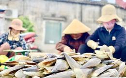 Trúng đậm 'lộc trời', ngư dân Hà Tĩnh kiếm tiền triệu mỗi ngày
