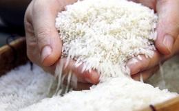 """Không có cơ sở khẳng định 90% người dân ăn """"gạo bẩn"""""""