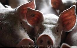 Đức kêu gọi Trung Quốc không cấm nhập khẩu thịt lợn của Đức do dịch tả lợn châu Phi